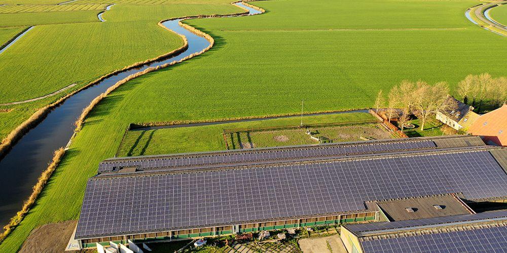 Koeien in de wei, zonnepanelen op dak